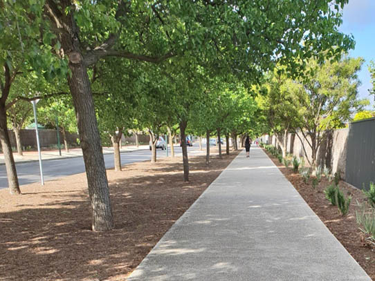 Walking up Sir Ross Smith Boulevard between Harry Weirda Reserve and Roy Amer Reserve