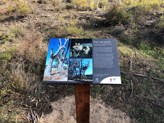 River red gum interpretive sign