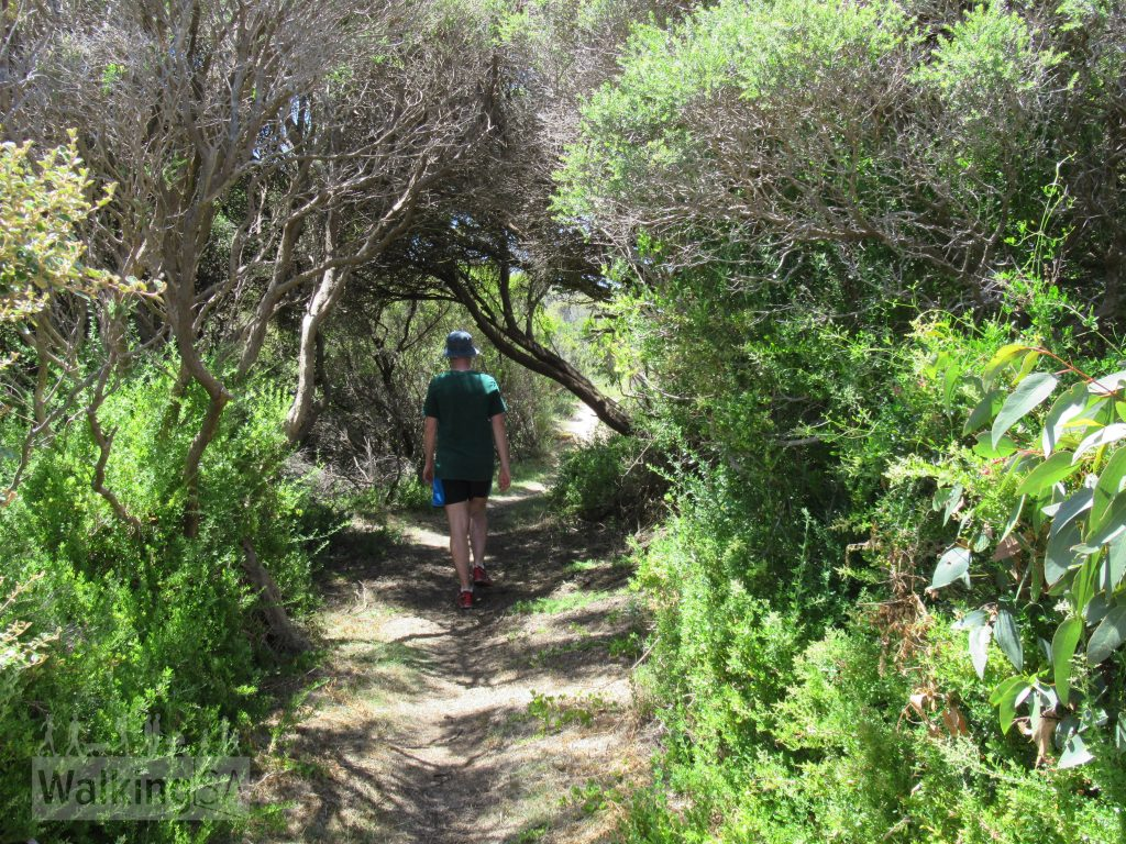 Hiking some of the inland section of the Cape Buffon Walk