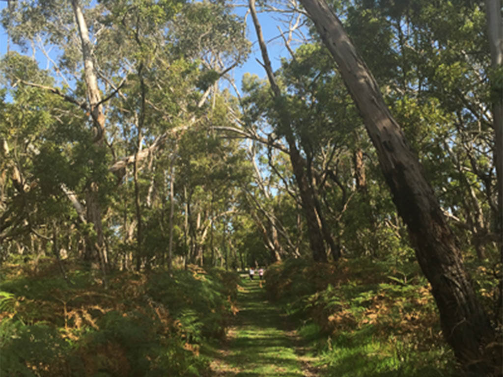 Stringybark Forest Walking Trail, Telford Scrub (north of Mt Gambier)