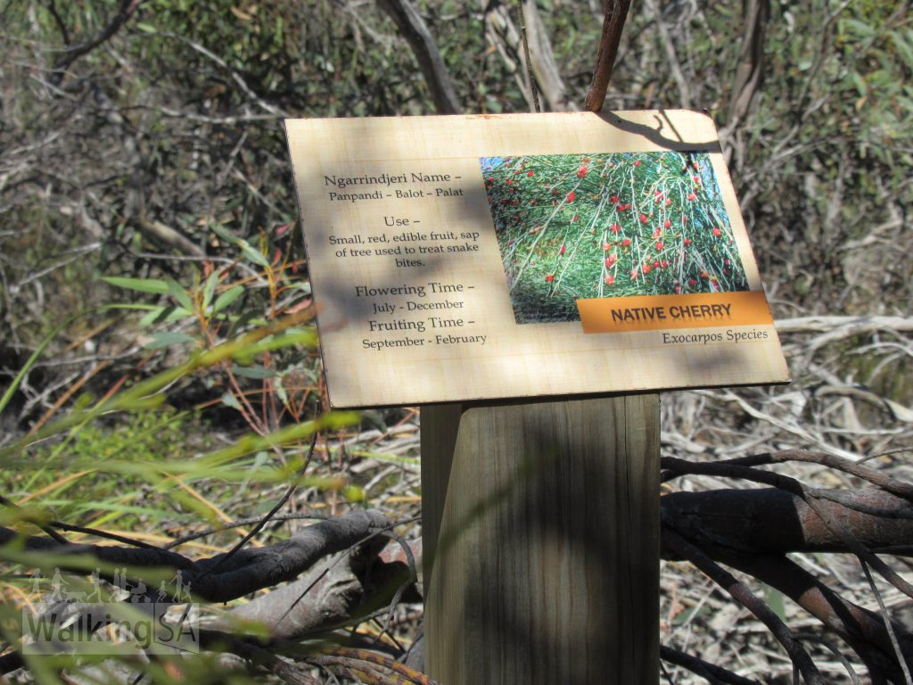 Along the Bonney Reserve Nature Trail are numerous interpretive signs outlining the Ngarrindjeri names of plants and how they were used for dietary or medical treatments