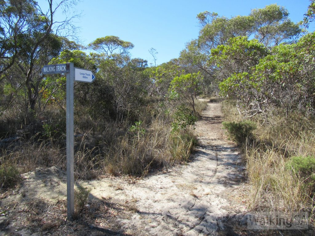 In the first stage of the Lions Walking Trail south of Bowman Street there are two possible route choices. We recommend following the trail labelled Loop Track as it is more picturesque and pleasant. The main trail is a wider trail.