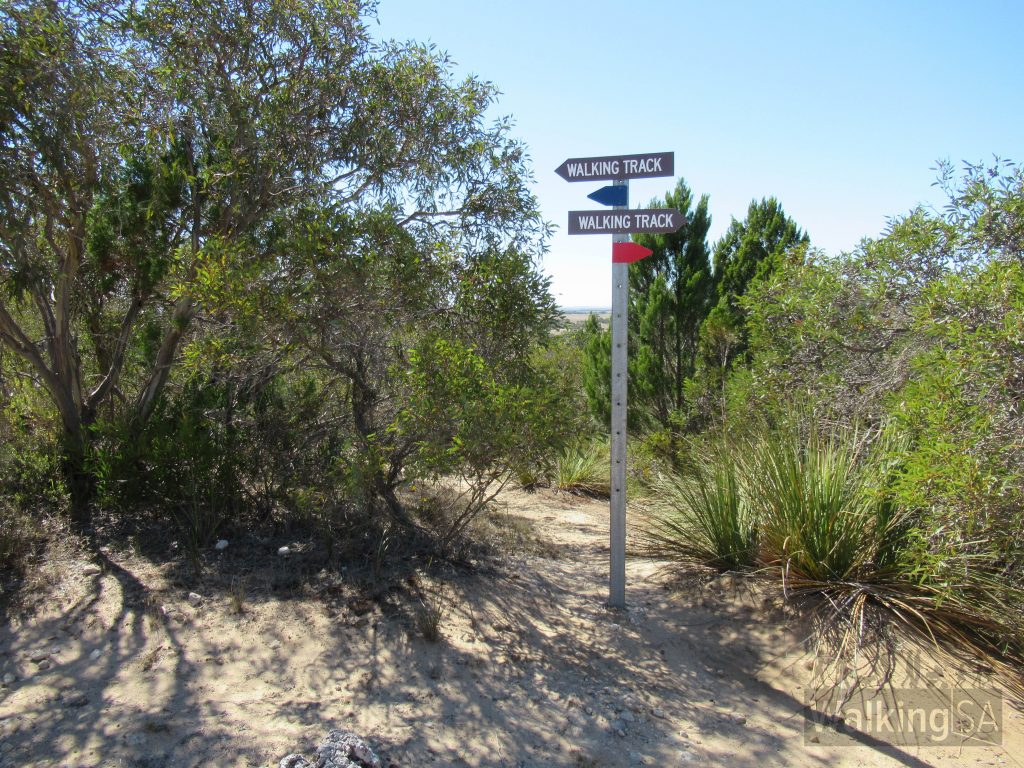 The Lions Walking Trail is marked with red and blue markers and signs. The blue signs point north (towards the Lookout and beyond) and the red signs point south (towards the trailhead on Bowman Street)