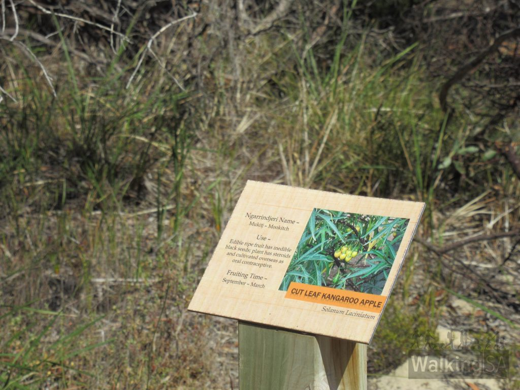 The Ngarrindjeri name for Cut Leaf Kangaroo Apple is Mukit - Mookitch