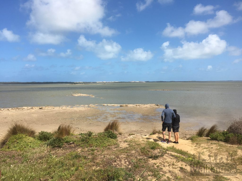 The Pelican Observatory Walk at Jack Point looks out to the Coorong's pelican breeding islands