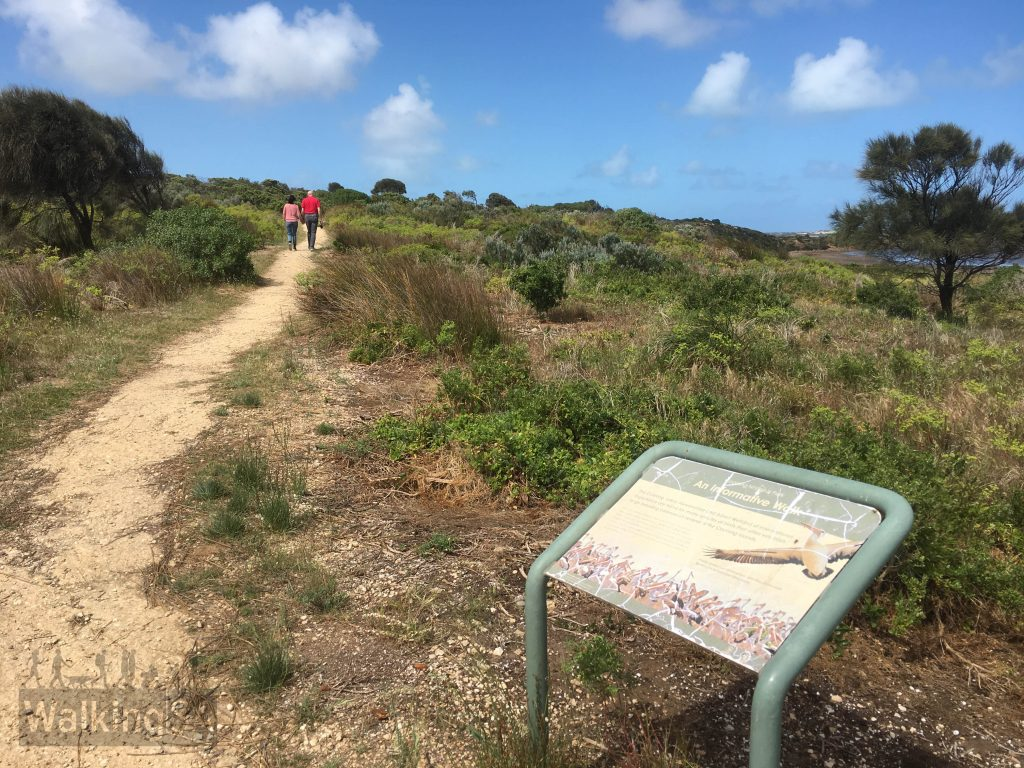 There are some interpretive signs along the Jack Point Pelican Observatory Walk explaining the role the island's breeding ground has for the pelicans