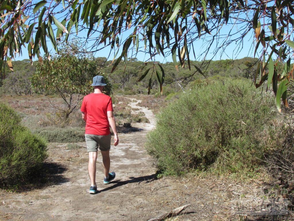 Walking across a flood plain on the Bonney Reserve Nature Trail