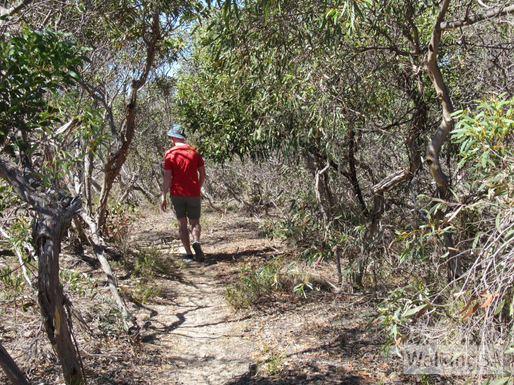 Walking the Bonney Reserve Nature Trail