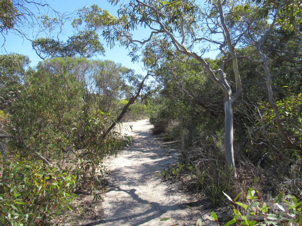 Walking the trail through Bonney Reserve Nature on the Coorong shore