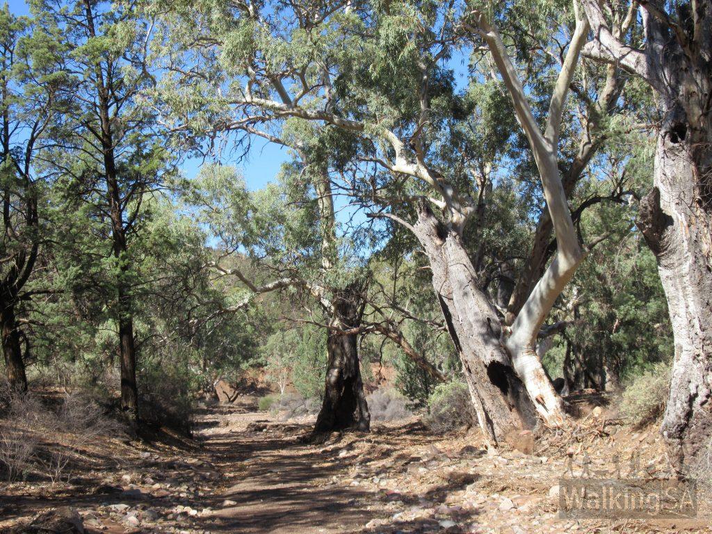 A dry creekbed, Yuluna Hike