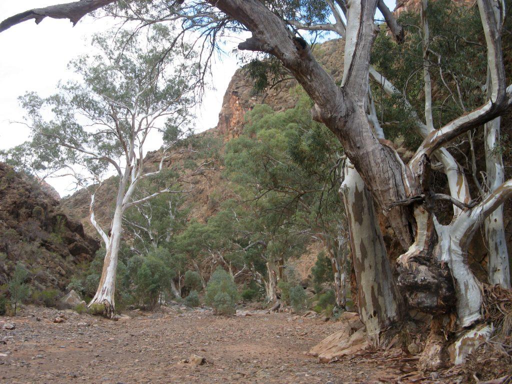 Bunyeroo Gorge Hike