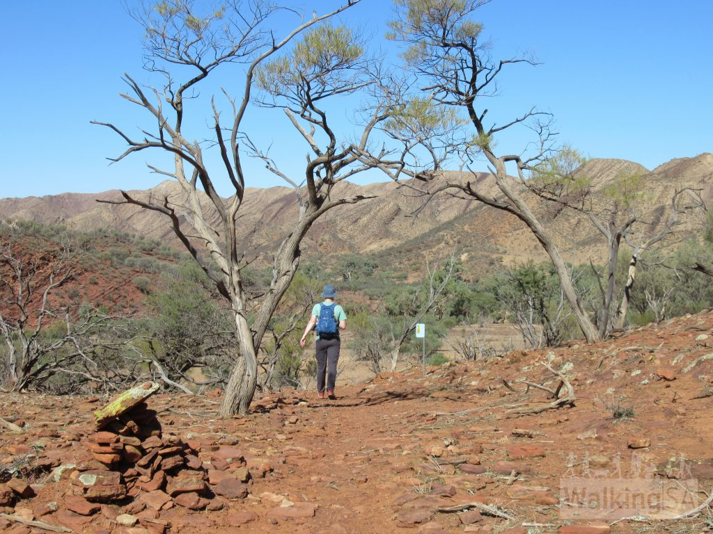 The Wilkawillina Gorge Hike is a classic Flinders walking experience