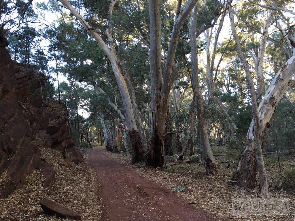 The hiking trail through the Pound Gap