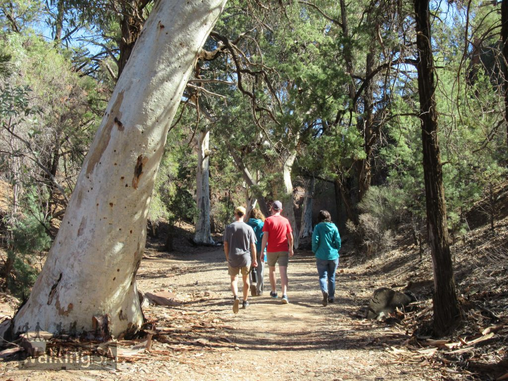 The start of the Sacred Canyon Walk before the gorge is walking trail
