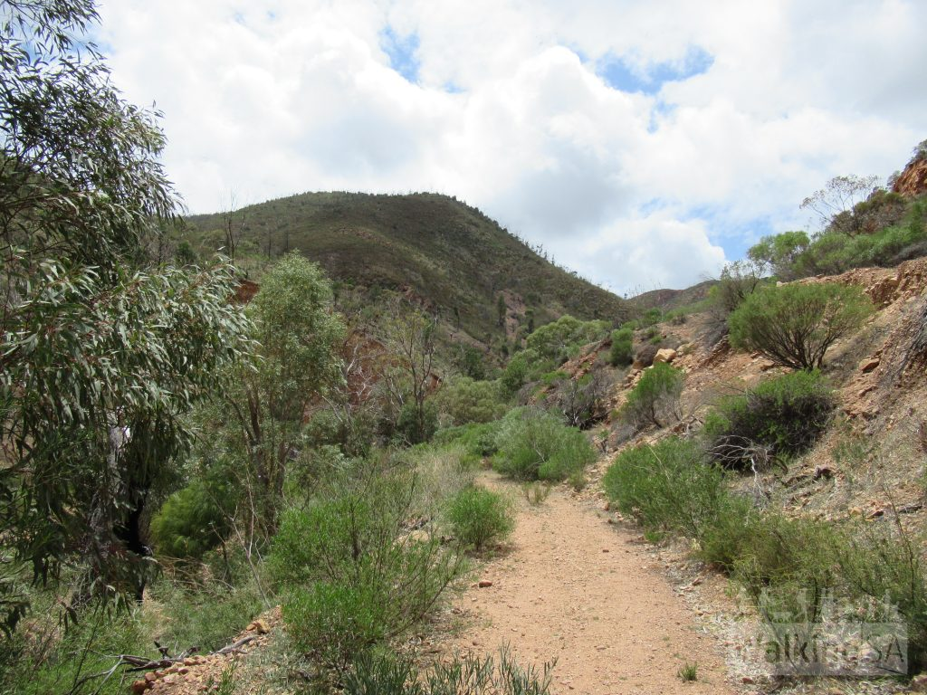 Walking along some fire track beside Napperby Creek on the Napperby Gorge Hike