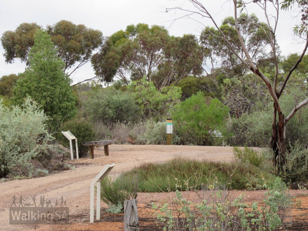Walking trails in the Australian Arid Lands Botanic Garden