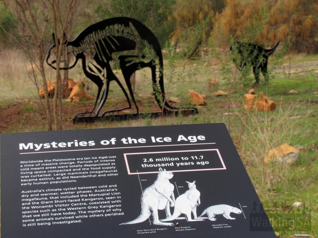 One of the re-created mega fauna figurines along the walk giving an idea on the size of animals that roamed the area prior to extinction 45,000 years ago