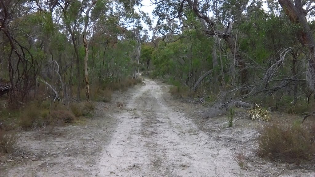 Following the tracks of the Banksia Loop