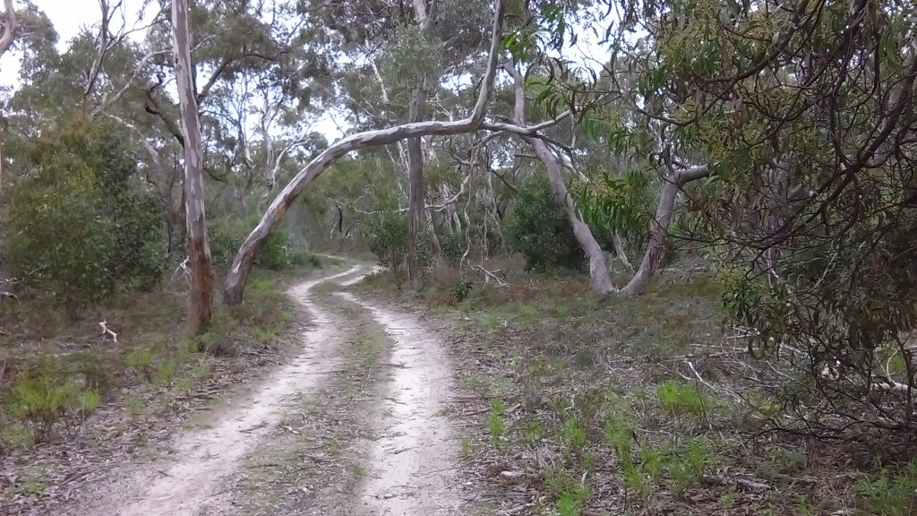 Following the tracks of the Currawong Loop