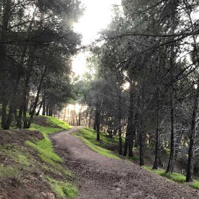 The Loop Trail, Flinders University