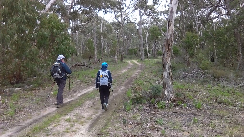 Walking along an extended hike through Padthaway Conservation Park