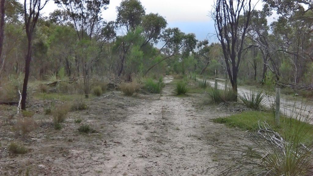 Walking along the Banksia Loop