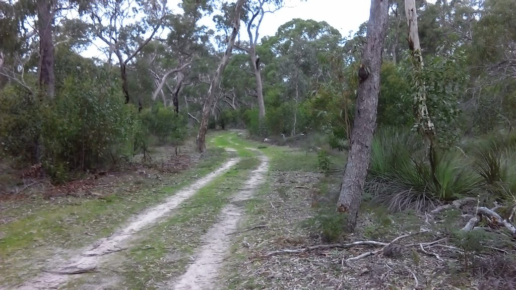 Walking along the common part of the Currawong Loop and Banksia Loop