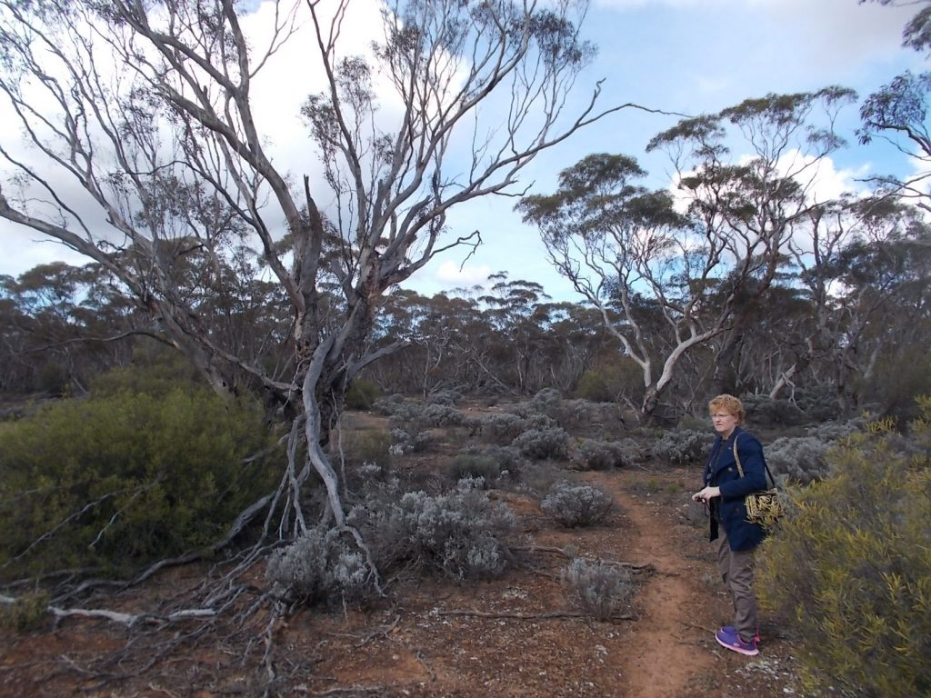 Walking the Mallee Trail (Nature Trail) in Moorunde Wildlife Reserve