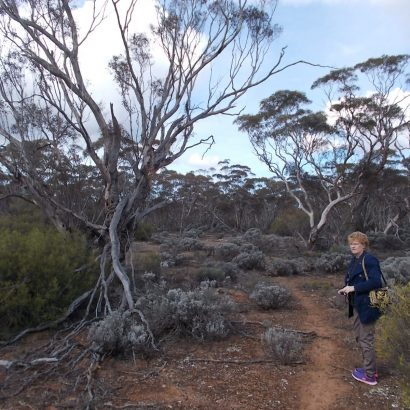 The Mallee Trail (Nature Trail), Moorunde Wildlife Reserve