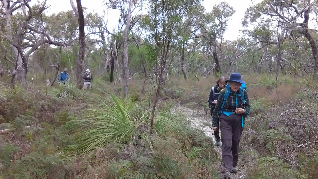 Walking the Orchid Track