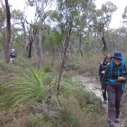 The Orchid Track, Padthaway Conservation Park