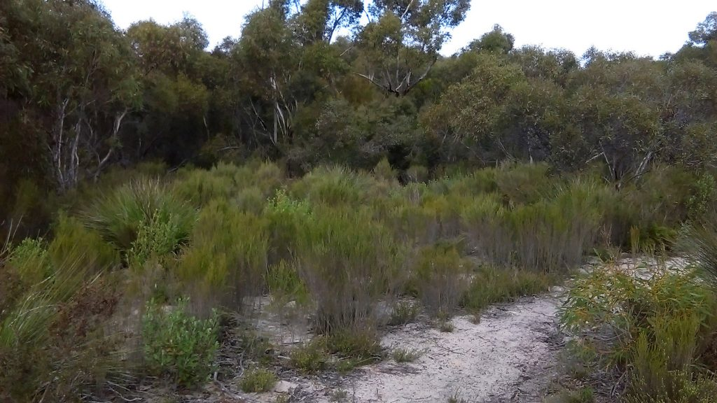Walking the Tyms Lookout Hike in Ngarkat Conservation Park