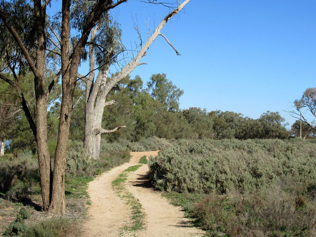 The Katarapko Trail and Rodeo Trail follow old vehicle tracks through the Lock 4 and Eckert Creek sections of Murray River National Park