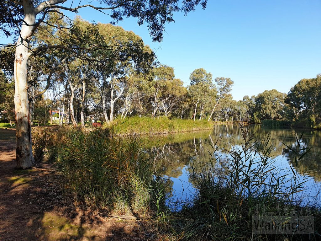 Wetlands along the Happy Home Reserve to Port Wakefield Road walk in the Little Para Linear Park (Lower)