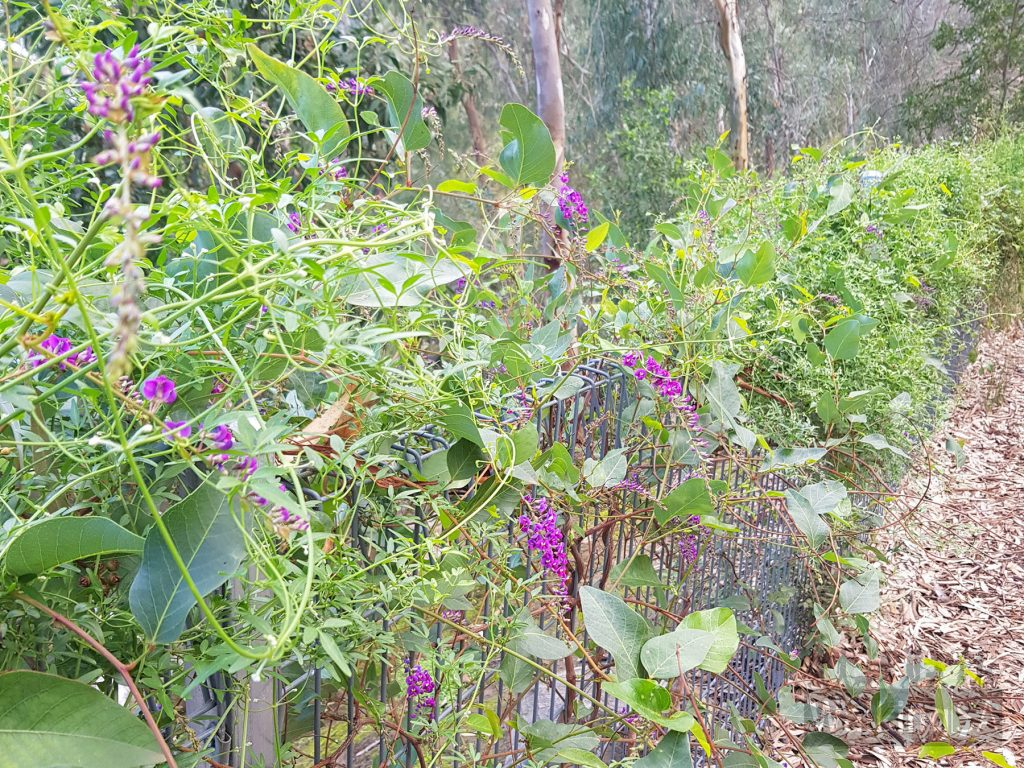 Flowering plants discovered along the way