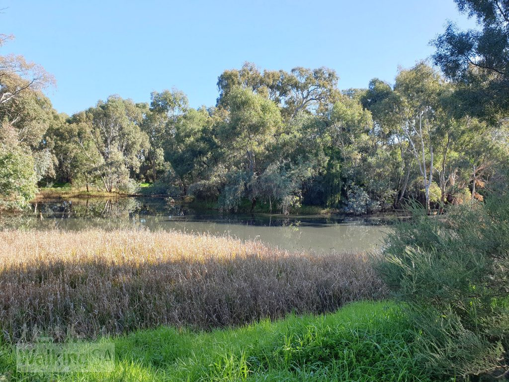 Views of the wetland lakes at the Little Para Wetland and Whites Road Wetland