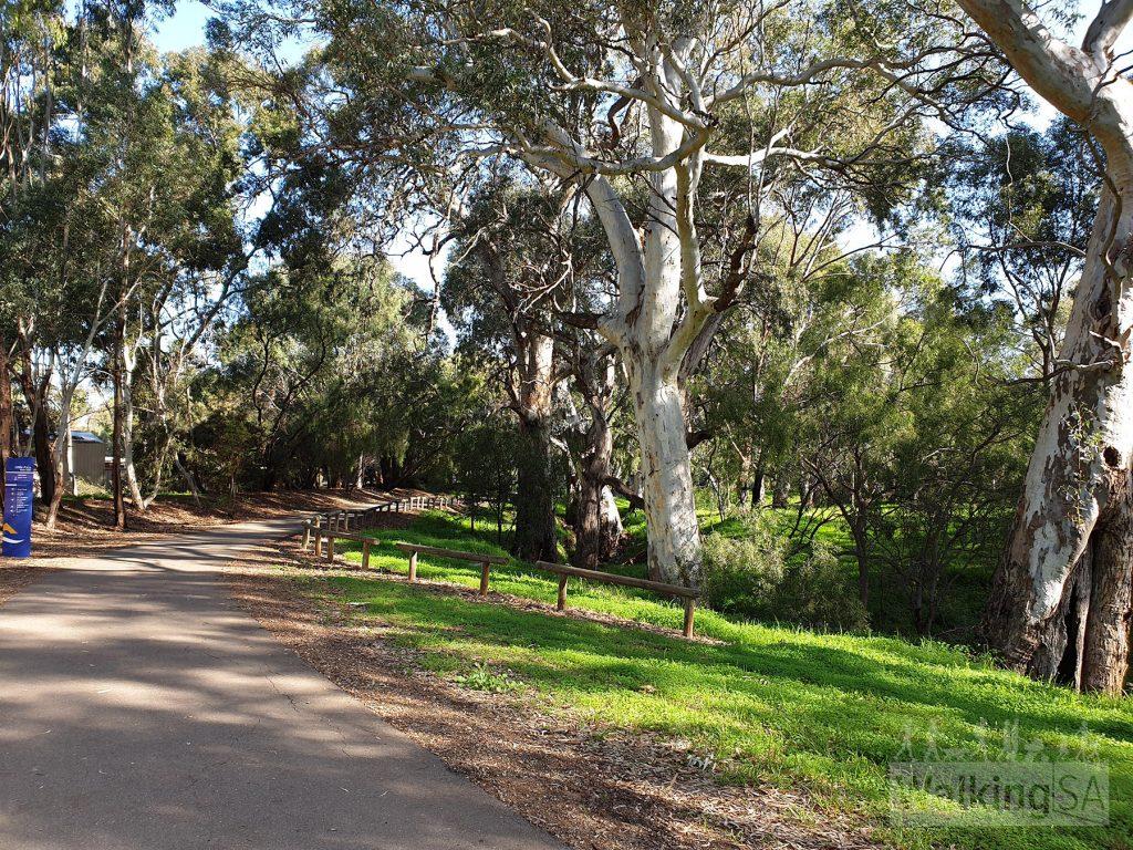 Walking in Little Para Linear Park (Lower)