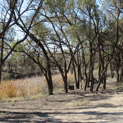 Rodeo Trail, Murray River National Park