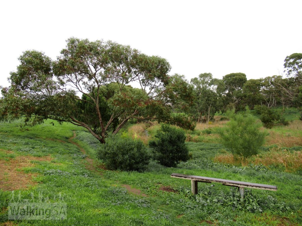When walking towards the beach, leave the bitumen trail and follow this informal path which follows the creek, while the bitumen trail heads off to the left to follow Hunter Road