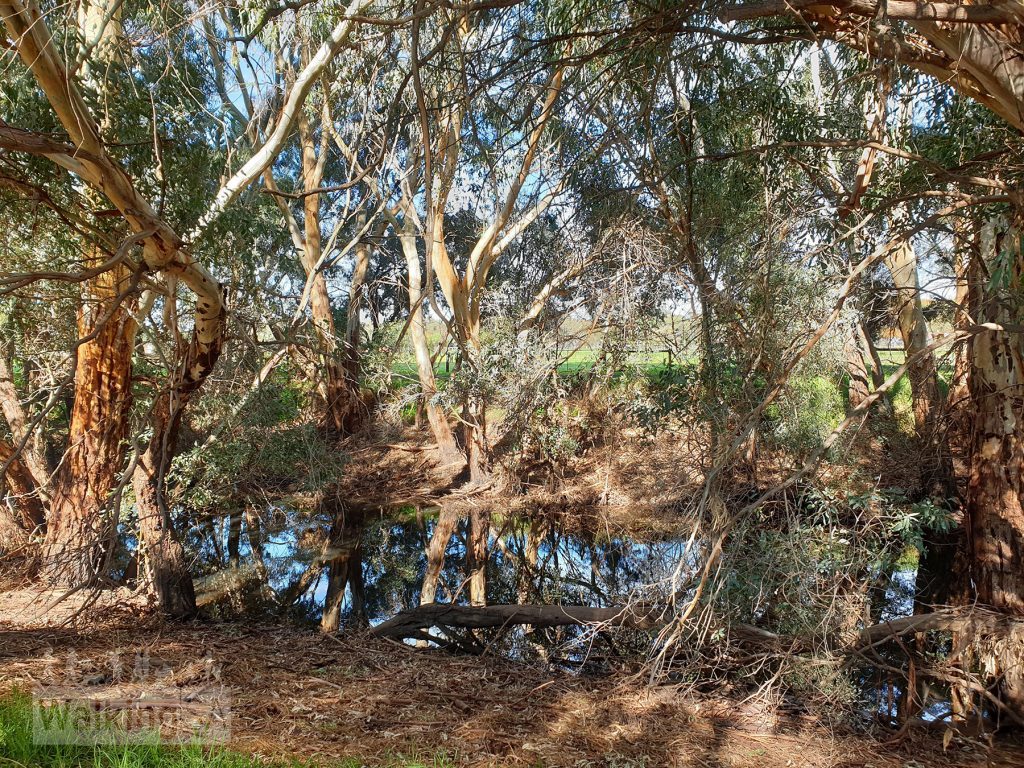 Wetlands in the Little Para Wetland and Whites Road Wetlands