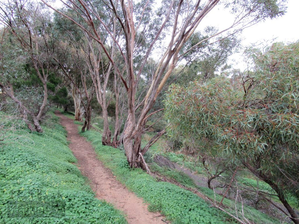 Follow this informal path which is parallel to and above the creek. The path can be narrow, and may be muddy after rains.