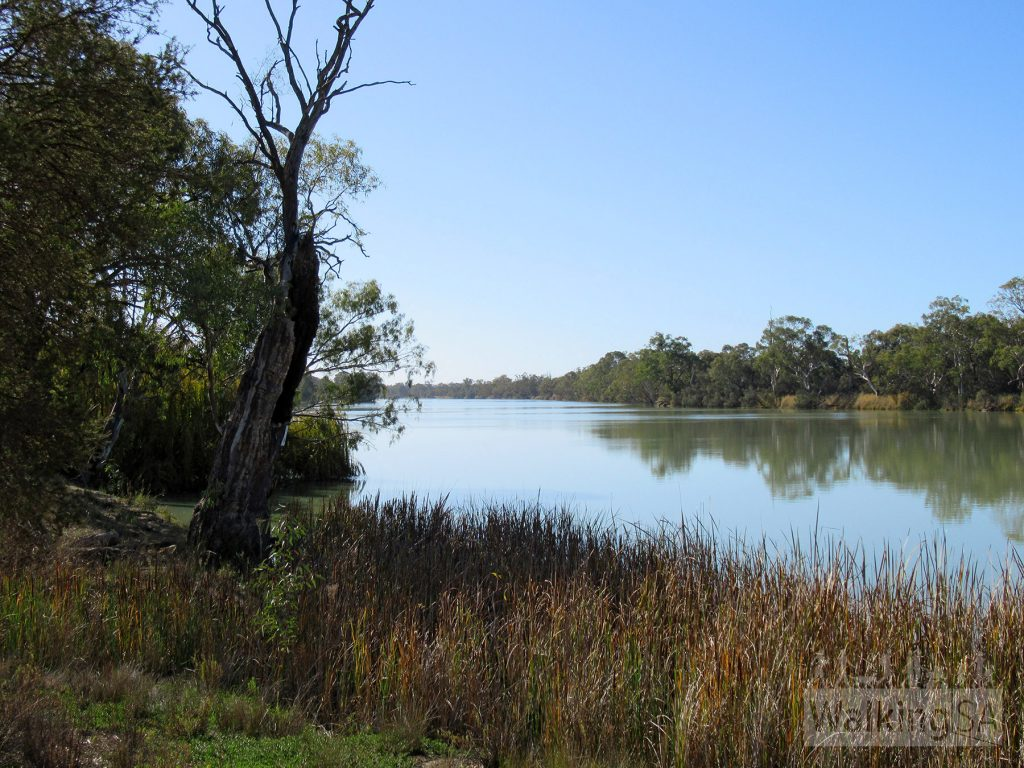 Walking beside the Murray River on the Katarapko Trail and Rodeo Trail