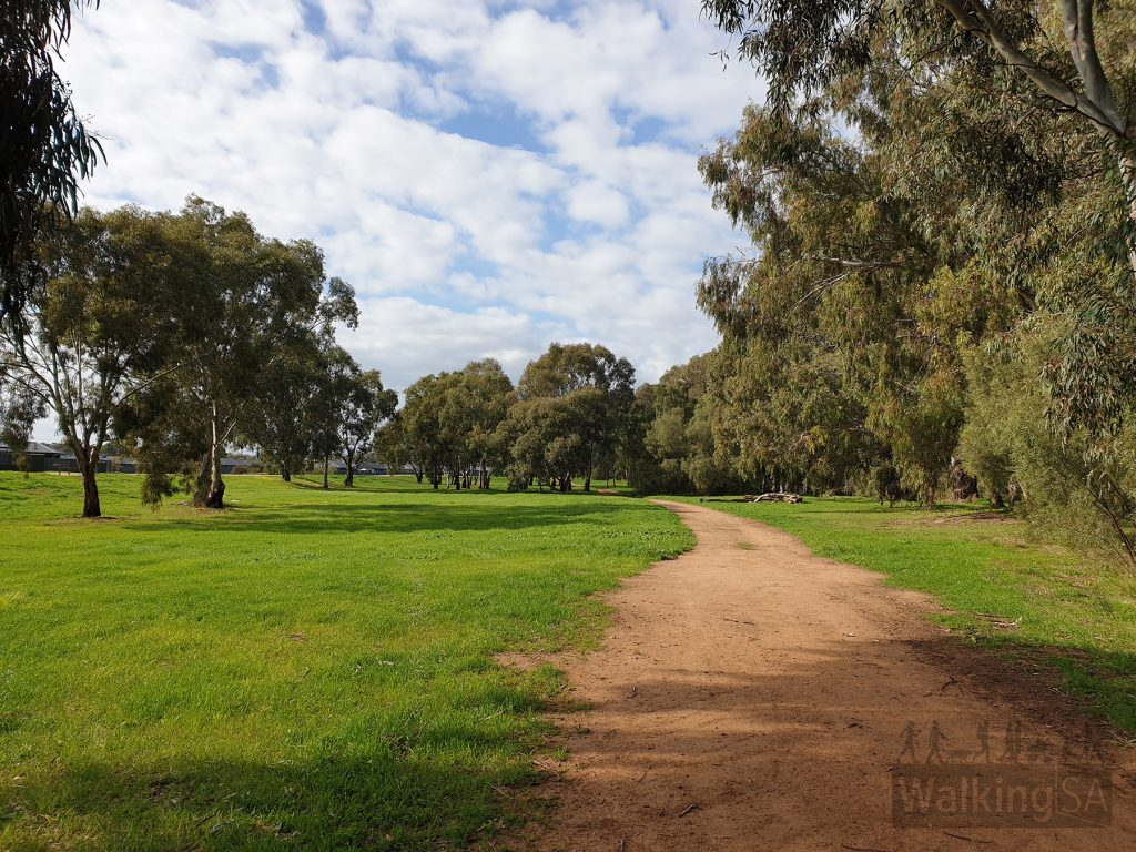 Walking along the northern side paths in Little Para Linear Park (Lower). The paths on the north side are sometimes dirt and sometimes gravel