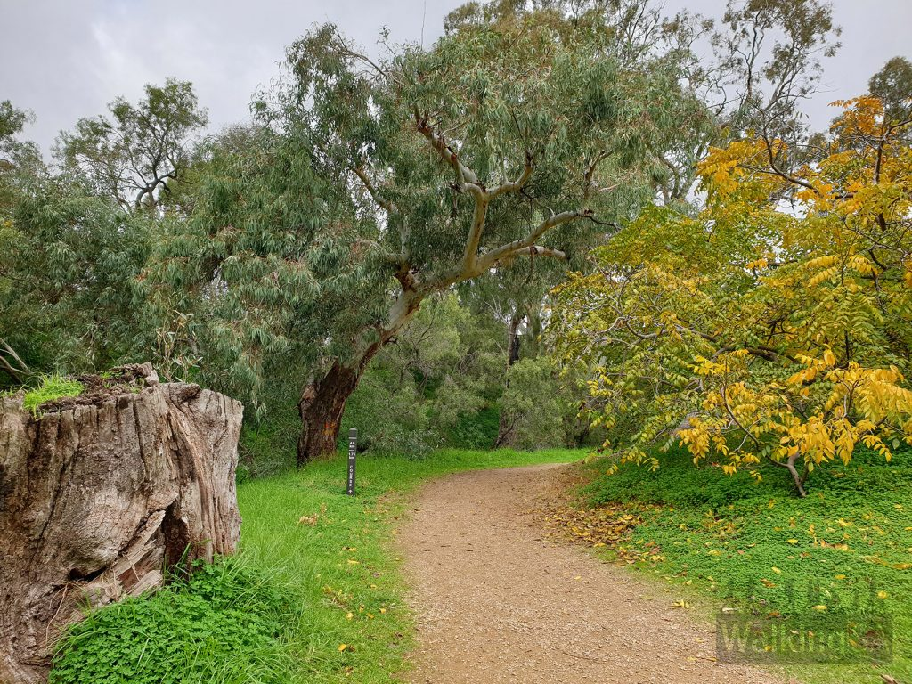 Walking paths on the Carisbrooke Park to Jenkins Reserve loop along the Little Para River Trail