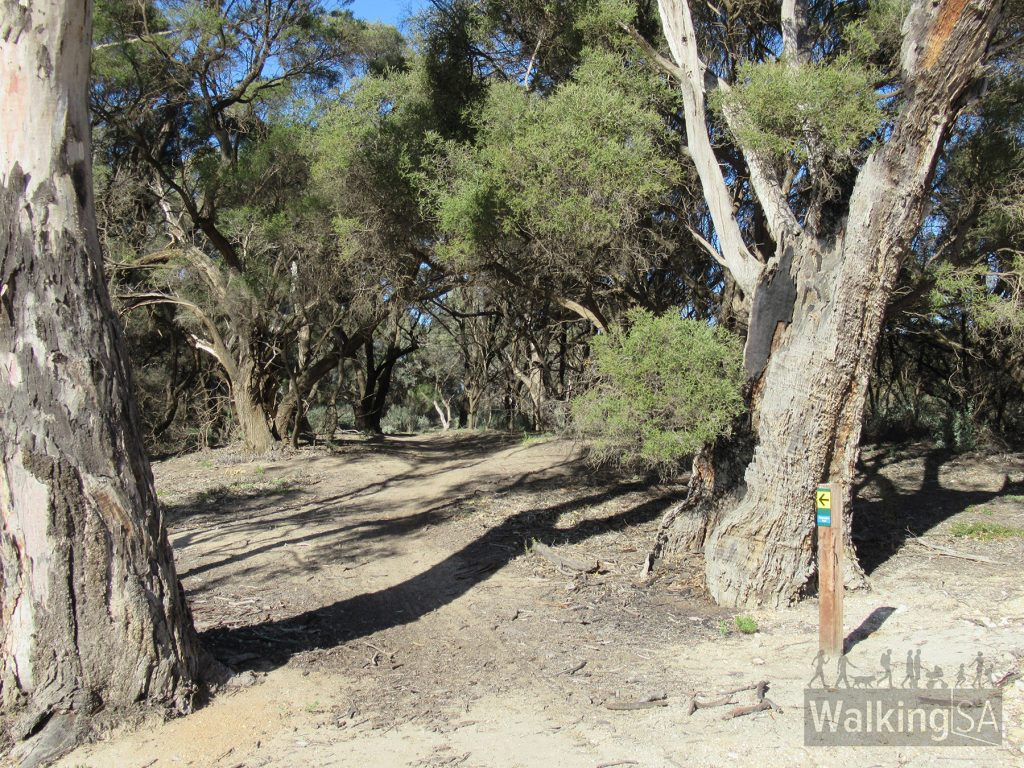 The Katarapko Trail south of the southern arm of Eckerts Creek, south of Katfish Reach, follows a walking path along the banks of the River Murray
