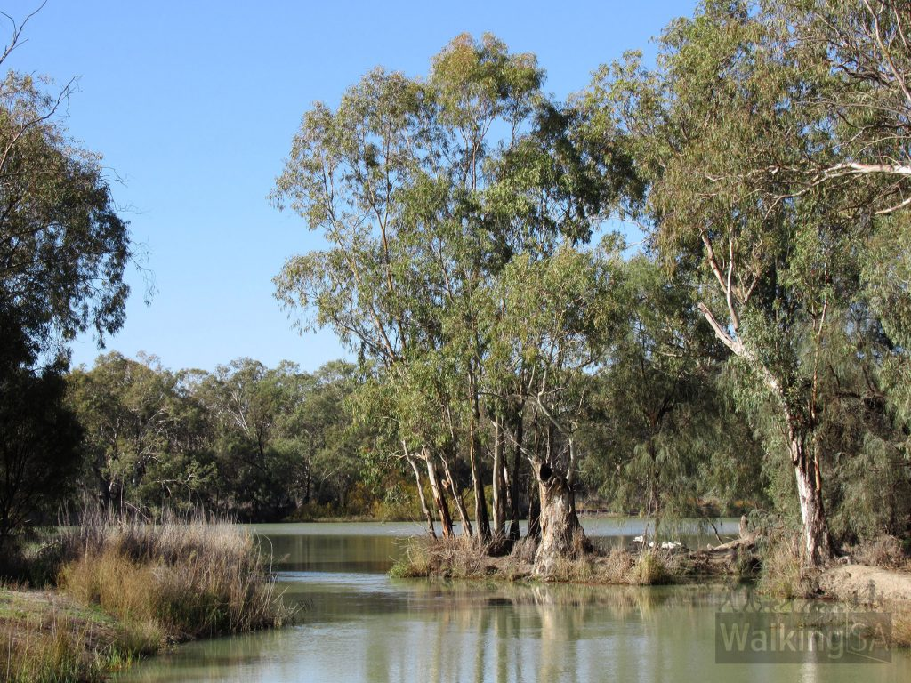 Views of the River Murray on the Katarapko Trail
