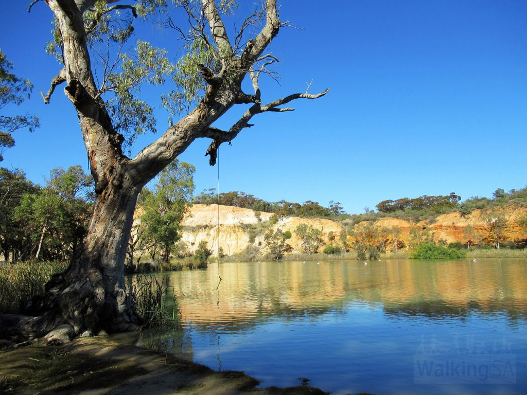 Views of Booky Cliffs and the River Murray on the Katarapko Trail