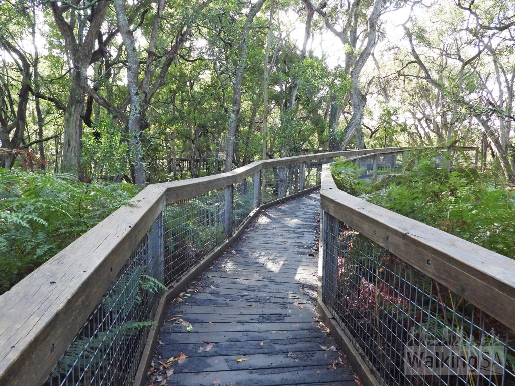 Walking along the boardwalk of the Forest Canopy Walk in Telford Scrub Conservation Park