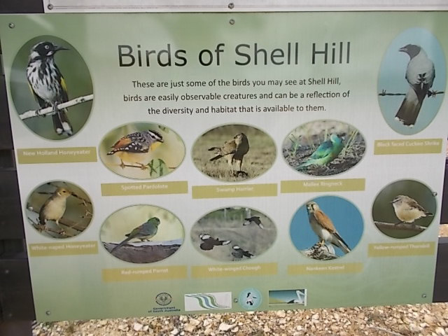 Interpretive sign about the birds of Shell Hill Reserve. Some of the birds you may see include; Red-Backed Kingfisher, Australian (Mallee) Ringneck, Mulga Parrot, Blue Bonnet, Splendid Fairy-Wren, White-Browed Babbler, Redthroat, Chestnut-Crowned Babbler, White-fronted Honeyeater, Crimson Chat, Gilbert's Whistler, Red-Capped Robin, Southern Scrub-Robin, Chestnut Quail Thrush and Red-Capped Robin the Restless Flycatcher.