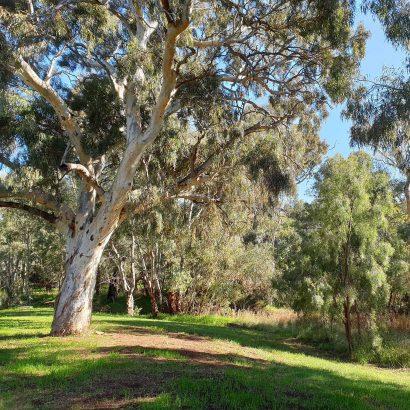 Loop of Little Para Wetland and Whites Road Wetland
